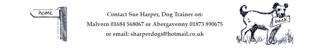 Contact Sue Harper, Dog Trainer on: Malvern 01684 568067 or Abergavenny 01873 890675 or email: sharperdogs@hotmail.co.uk
